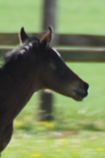 foal par Policy Mater