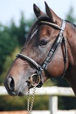 foal par Lizio