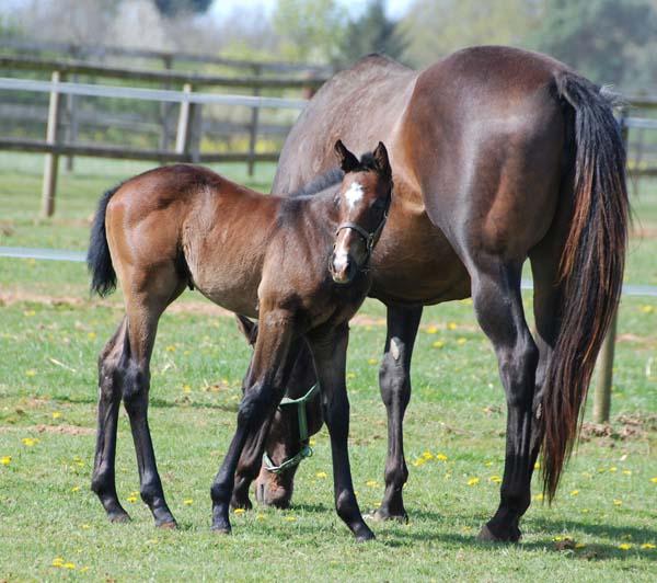 foal Literato x Serenella