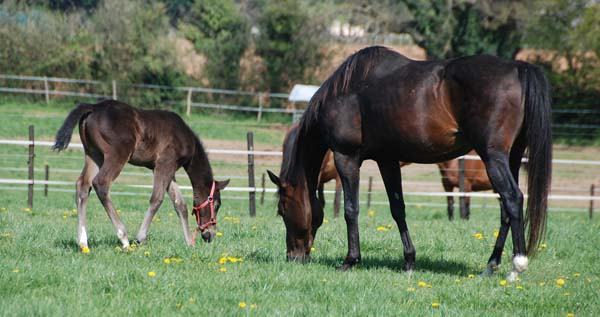 foal Lizio x Caline