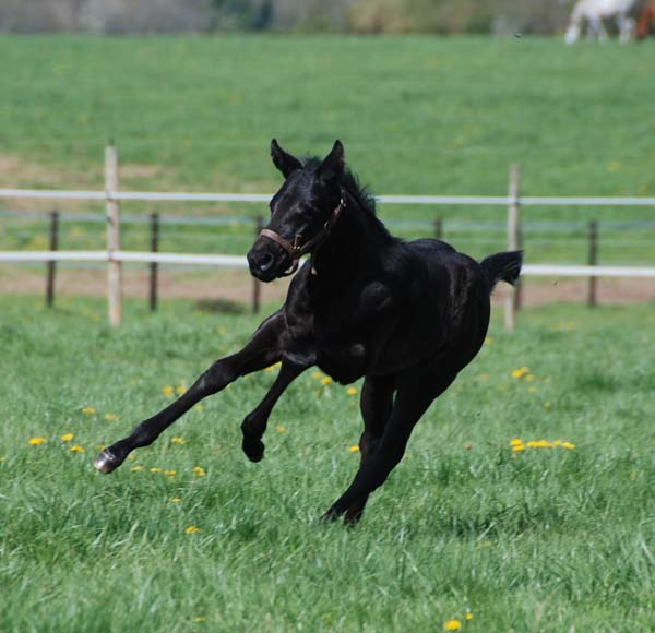 foal Lizio x River Lady