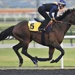 Trade Storm - ph. Horse Profil
